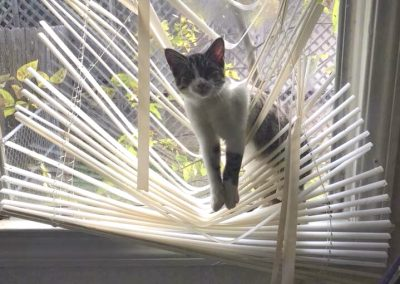 One More Reason to Replace Mini-Blinds: Cats
