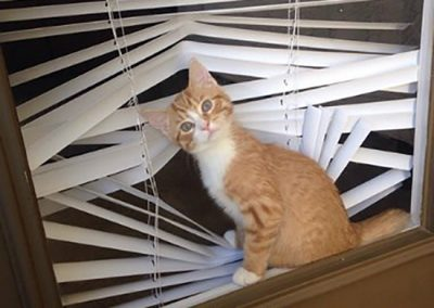 Cats in blinds meme 5