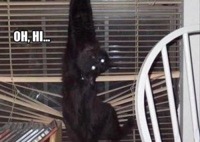 Cats in blinds meme 6