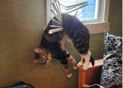 Cats in blinds meme 8