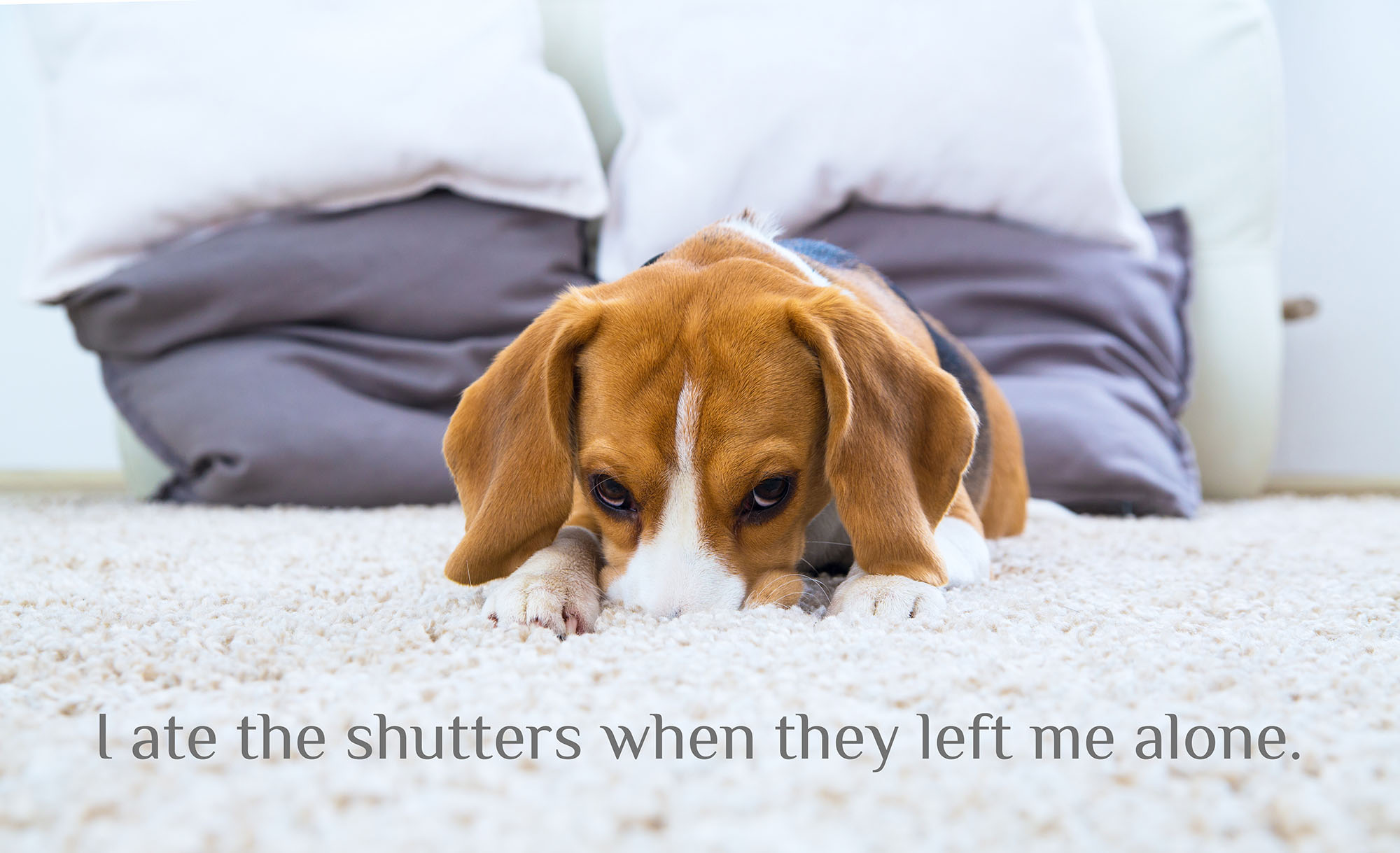 I ate the shutters when they left me alone.