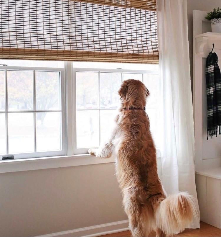 Dogs: The Ultimate Window Decor