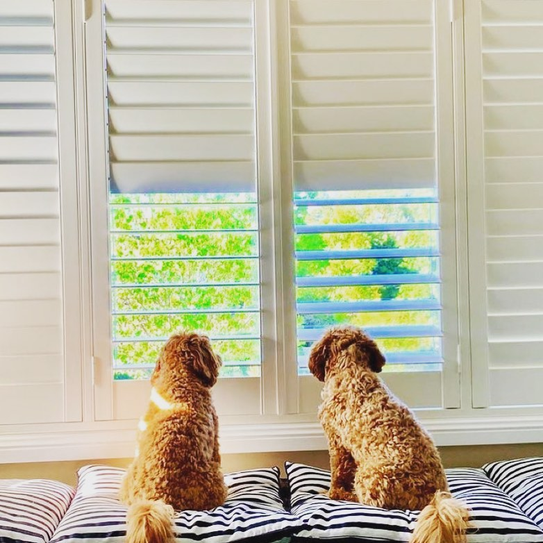 Plantation shutters are dog friendly!