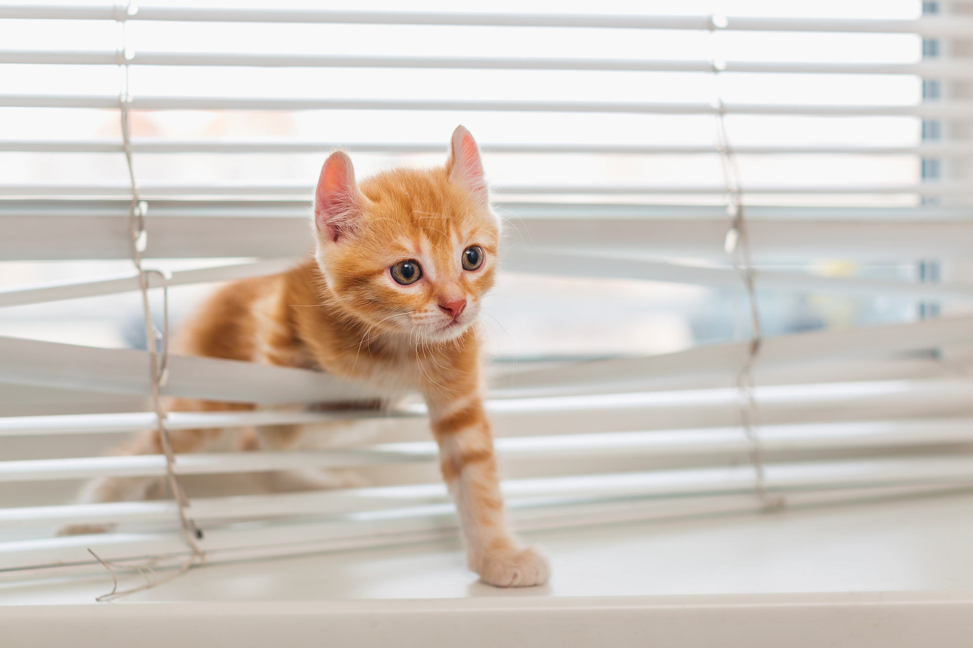 Plantation shutters have no cords or strings so are less tempting to pets than blinds.